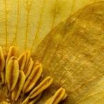 #architecture intérieure et décoration#conseilcouleurs#palette jaune#tendancecouleurs