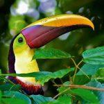 #homemyhomedécorationintérieure#esprittropical#toucan#couleurs#