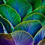 #homemyhomedécorationintérieure#espritjungle#tropicalstyle#plantes
