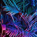 #homemyhomedécorationintérieure#inspirationjungle#tropicalstyle#