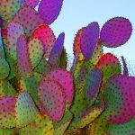 #homemyhomedécoartionintérieure#inspirationdéco#ananas#cactus#inspirationtropicale#conseilen déco#