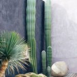 #homemyhomedécorationintérieure#conseilendéco#jardin#cactus#inspirationtropicale