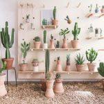 #homemyhomedécorationintérieure#conseilendéco#inspirationtropicale#cactus